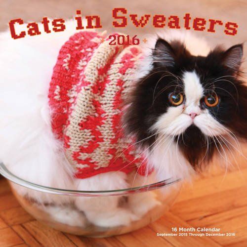 cats in sweaters 5